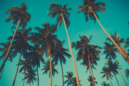 tropical paradise: Retro toned palm trees on over sky background Stock Photo