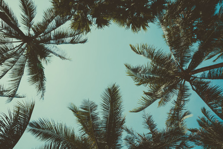 Retro stylized palm trees over sky background Imagens