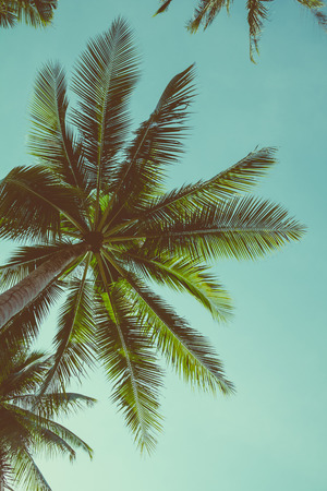 Retro toned palm tree over sky background