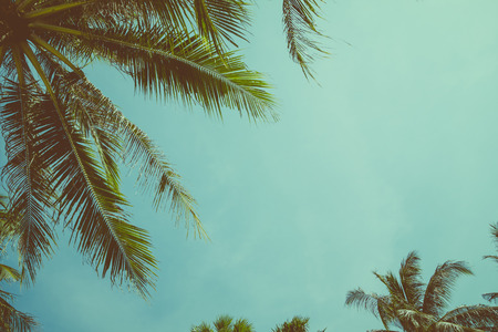 Vintage tónovaný palma nad pozadí oblohy