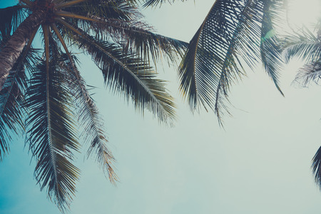 Vintage stylized palm tree over sky background