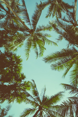 Vintage toned different palm trees over sky background, view up