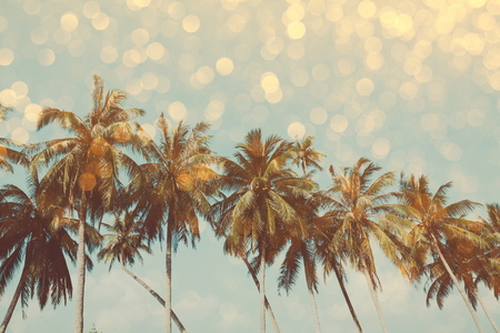 Palm trees on tropical shore with golden party glamour bokeh overlay, double exposure effect stylized Imagens