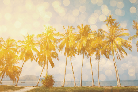 tropical tree: Palm trees on tropical shore with golden party glamour bokeh overlay, double exposure effect stylized Stock Photo