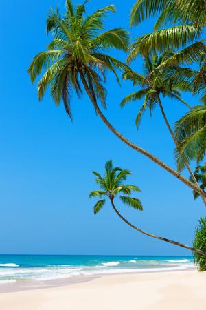 verticales: idílica playa tropical de arena con el océano y las palmeras limpias blancas sobre el agua