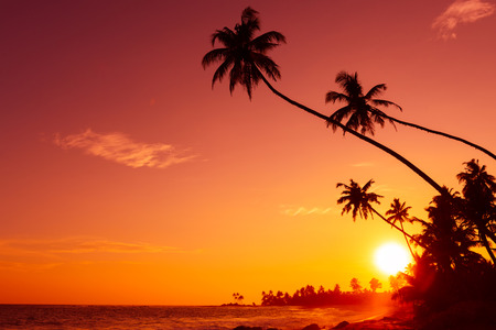 club scene: Sunset on tropical beach with palm trees silhouettes and shining sun circle Stock Photo