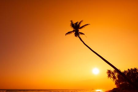 thailand beach: Palm tree silhouette at tropical ocean beach at warm sunset