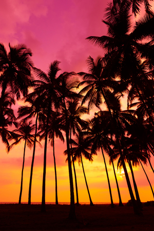 palm trees: Palm trees silhouettes on tropical beach at vivid sunset time Stock Photo
