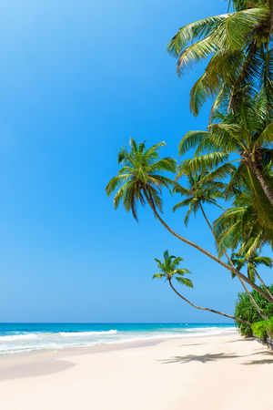Tropical beach with palm trees on ocean shore and clean sand at sunny day