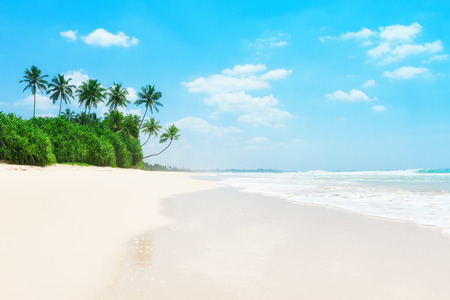 jungle scene: Palm trees and green tropical bushes on ocean beach