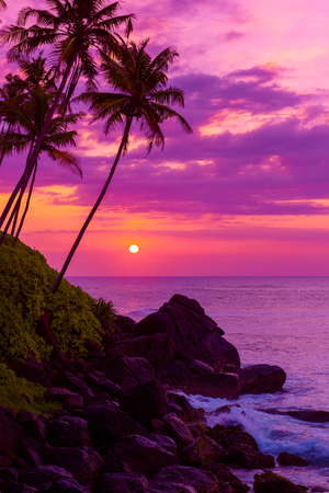 shore: Palm trees on tropical beach at sunset