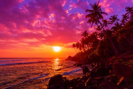 Zachód słońca na tropikalnej plaży z palmami sylwetki