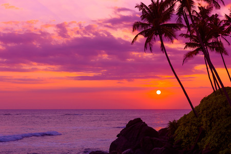 Warm colorful tropical sunset over the ocean with coconut palm tree silhouettes at tranquil summer beach on island resort