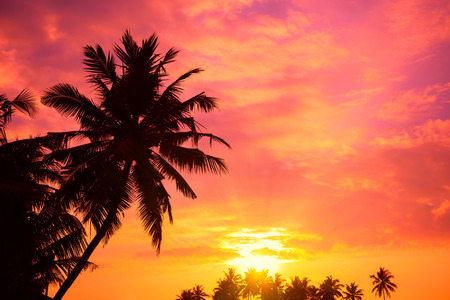 palm trees: Vibrant tropical sunrise with palm trees silhouettes