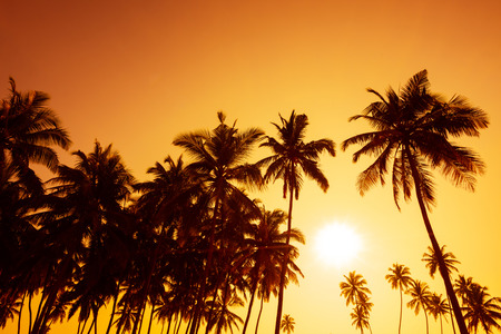 Palm trees silhouettes on tropical beach at summer warm vivid sunset time Stock Photo