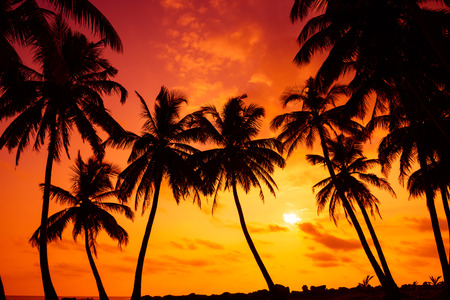 Tropical beach with palm tress silhouettes at vivid sunset Stock Photo
