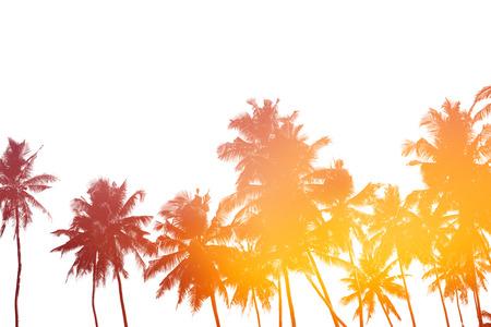 Palmbomen silhouetten geïsoleerd op wit met dubbel belichtings effect