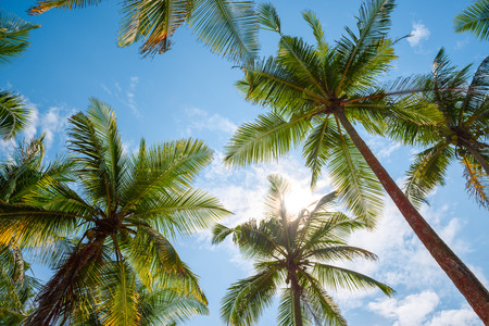 view on sea: Exotic tropical palm trees at summer, view from bottom up to the sky at sunny day