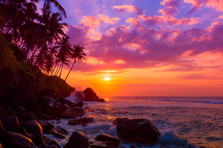 Palm tress on tropical coast at sunset Stock Photo