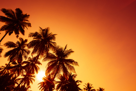 Palm trees silhouettes on tropical beach at summer warm vivid sunset time and sun circle with rays Stock Photo