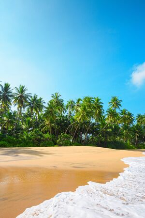 paradise beach: Beautiful beach on tropical island with coconut palm trees and clean sand with fluffy wave at clear sunny summer day Stock Photo