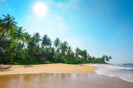 palm trees: Beautiful tropical beach with coconut palm trees
