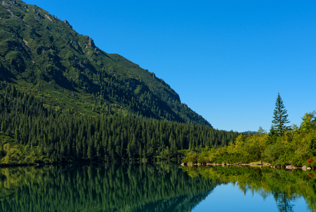 nature scenery: Lake in high mountains with pine forest