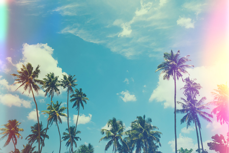 Tropical palm trees at sunny summer day, vintage film stylized with film light leaks Stock Photo