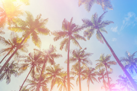 Exotic tropical palm trees at summer, vintage film light leak stylized and color toned