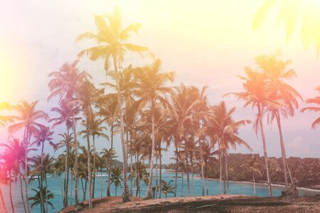 Palm trees on tropical beach, vintage toned and retro color stylized with light leaks Stock Photo