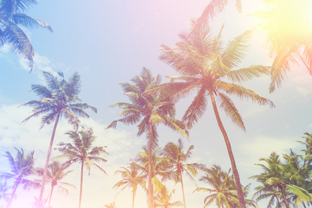 Exotic tropical palm trees at summer, view from bottom up to the sky at sunny day with retro stylized film light leak Stock Photo