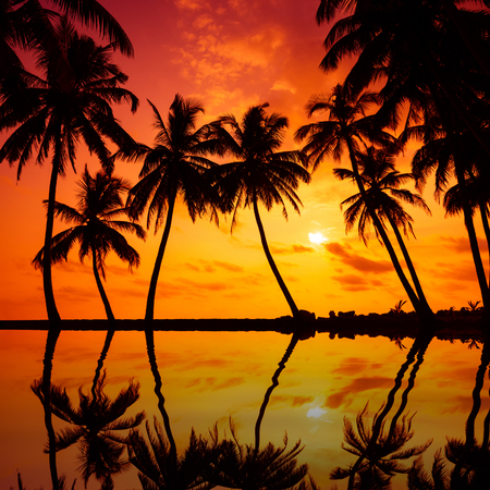 tress: Tropical beach with palm tress silhouettes at vivid sunset with reflection in calm water Stock Photo
