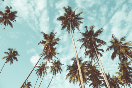 Coconut palm trees on tropical beach vintage nostalgic film color filter stylized and toned Stock Photo