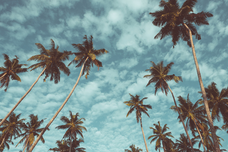 faded: Coconut palm trees on tropical beach vintage nostalgic film color filter stylized and toned Stock Photo