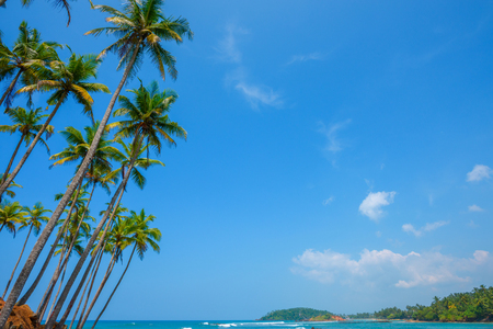 Palm trees on tropical ocean shore