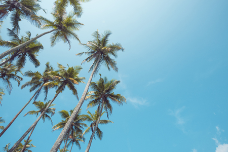 Palm trees on beach with clear sky vintage toned