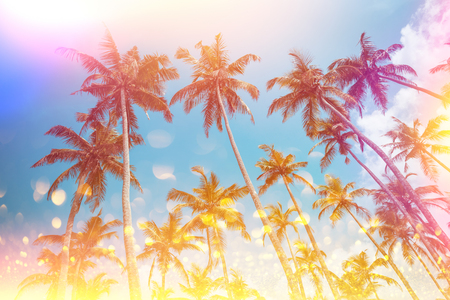 Vintage stylized tropical palms with light leaks and golden glitter