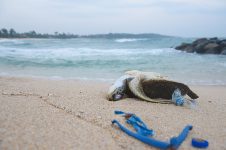 Dead sea turtle on the sand beach among ocean plastic waste Stock Photo