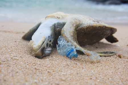 Dead turtle and plastic bottle garbage from ocean on the beach Stock Photo