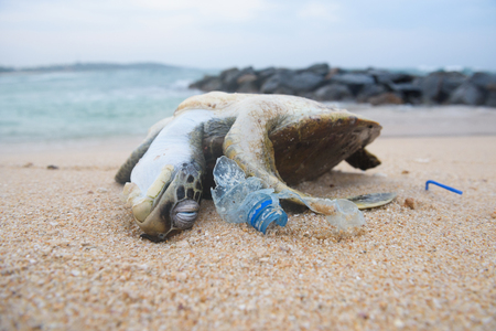 Dead turtle among plastic garbage from ocean on the beach Stock Photo