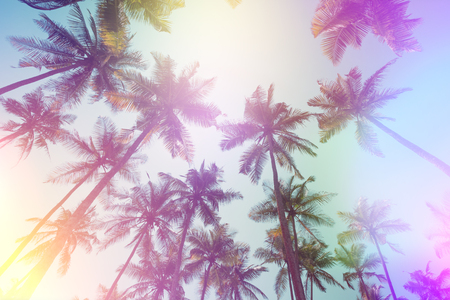 Palms perspective view vintage film stylized with light leaks