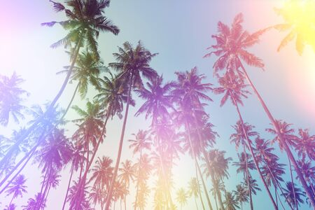 Palm trees perspective view vintage film stylized with film light leaks