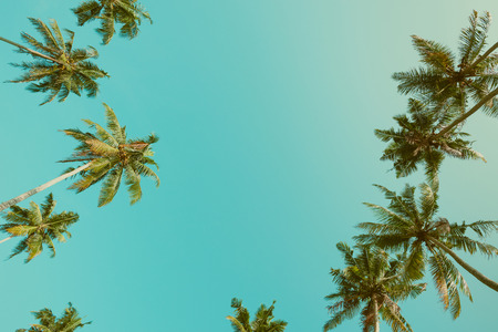 Palm trees crowns over sky background vintage color filtered with copy space Stock Photo