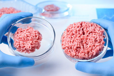 Scientist hands in glovers hold and show two samples of raw ground meat in laboratory petri dishes