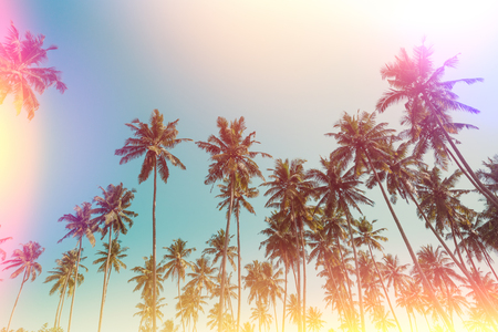 Palm trees vintage film stylized with film light leaks Stock Photo