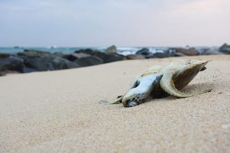 Dead turtle on the beach Stock Photo