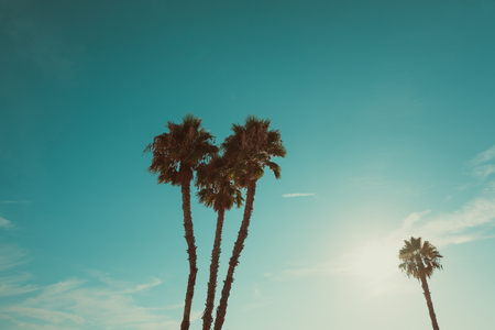 California Beach Palm Trees At Summer Hot Day Vintage Color Stylized With Copy Space Photo