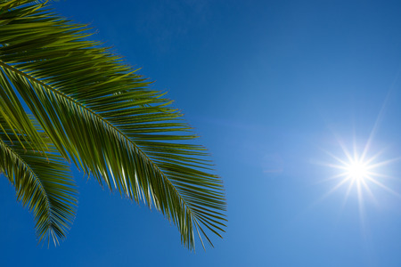 Tropical palm leaf with shining sun and clear sky Stock Photo