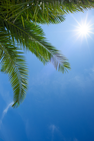 Green palm leafs with clear blue sky and shining summer sun star Stock Photo