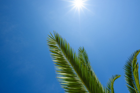 Green palm leafs over blue sky with shining sun Stock Photo